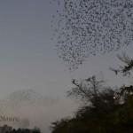 Birds -Jamnagar