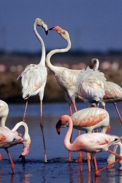 Jamnagar, the bird watchers Paradise