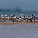 Narara Island -Jamnagar