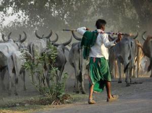 Maldhari in Gir